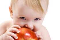 Baby Led Weaning - Baby isst Apfel